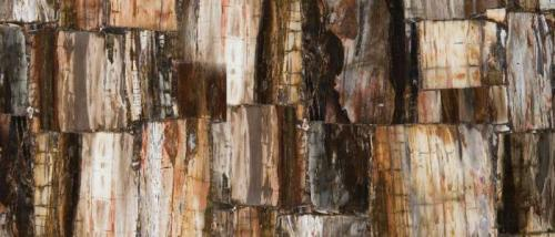 8331 Petrified Wood